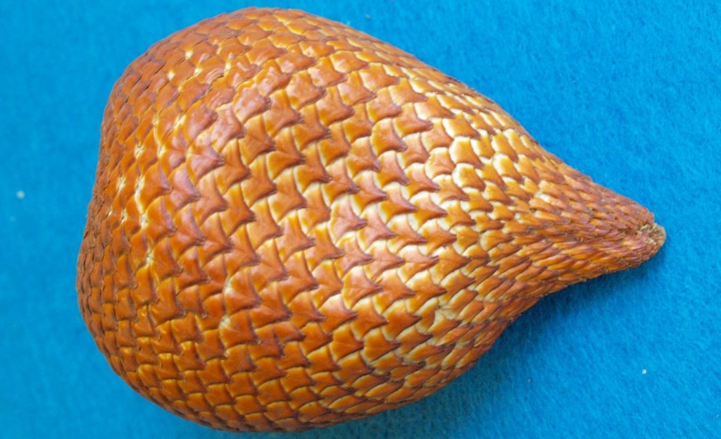 Snake fruit with perfect ripe condition