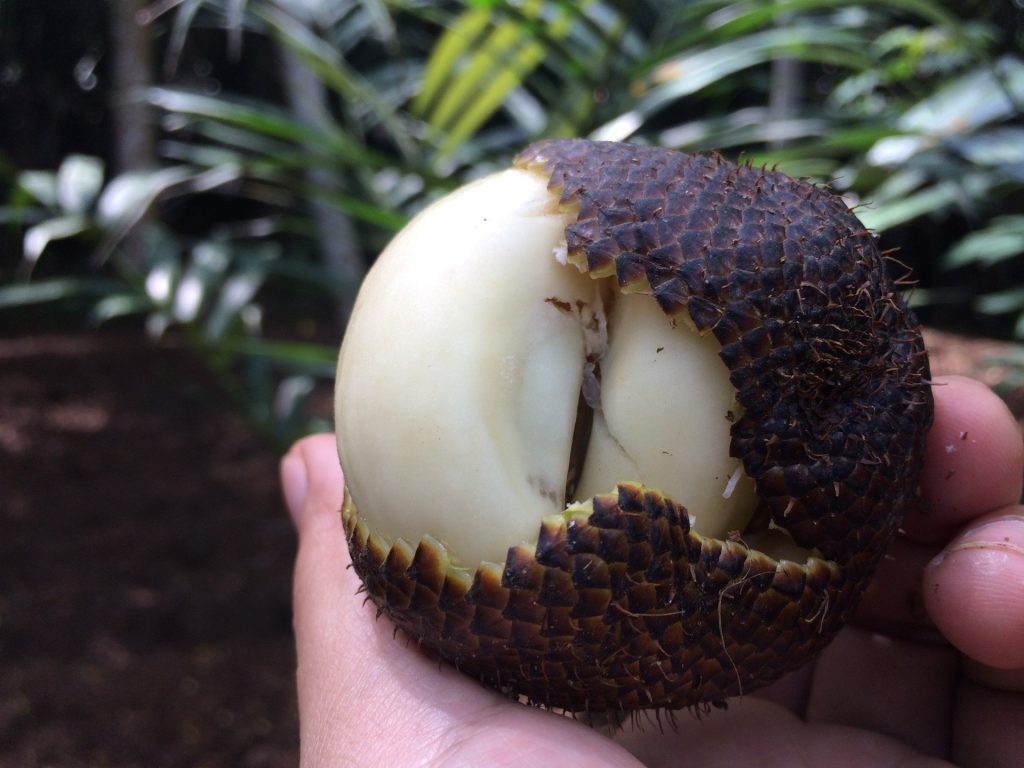 Snake fruit medical condition to not eat it