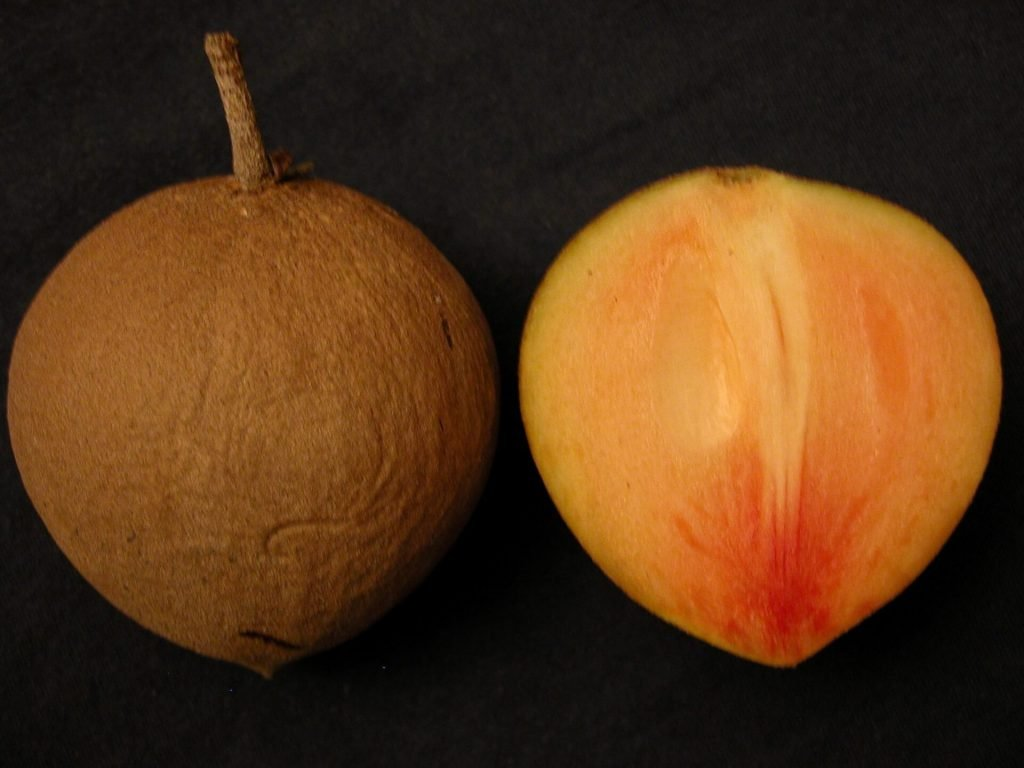 My favorite tropical fruit sawo or sapodilla
