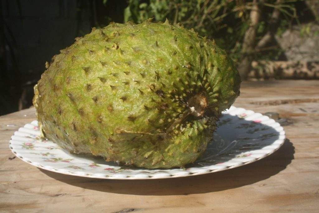 My favorite tropical fruit soursop